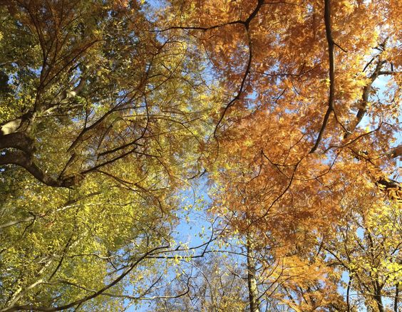 autumn - shakujikoen @Tokyo Japan, japan - view 5