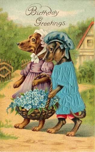 Dressed dogs birthday postcard: