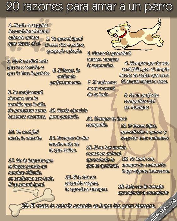 20 razones para amar a un perro.  #PetsWorldMagazine #RevistaDeMascotas #Panama #Mascotas #MascotasPanama #MascotasPty #PetsMagazine #MascotasAdorables #Perros #PerrosPty #PerrosPanama #Pets #PetsLovers #Dogs #DogLovers