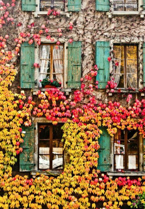 Love the vines & colors