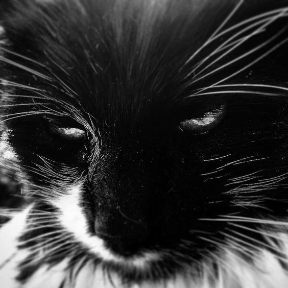 Socks Rey-Janssen #cat #family #nosmile #tiger #home