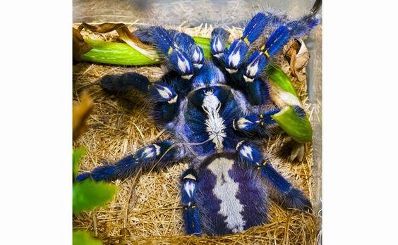 As aranhas mais estranhas e bonitas