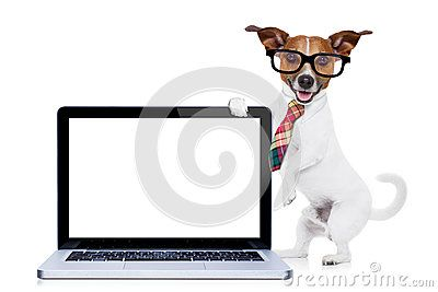 Businessman Dog - Download From Over 47 Million High Quality Stock Photos…