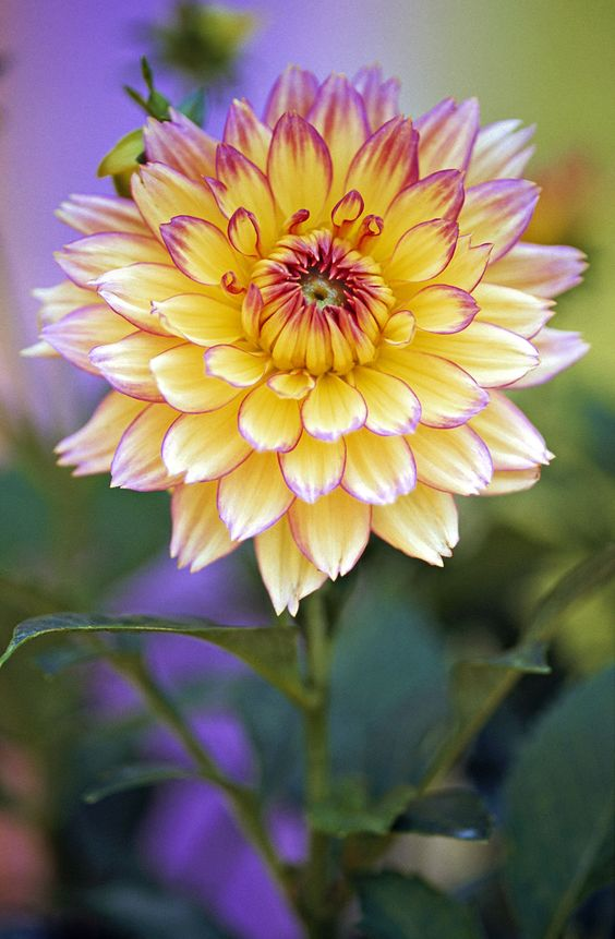 Flowering-Plant-With-Flower-blossoming-from-plant