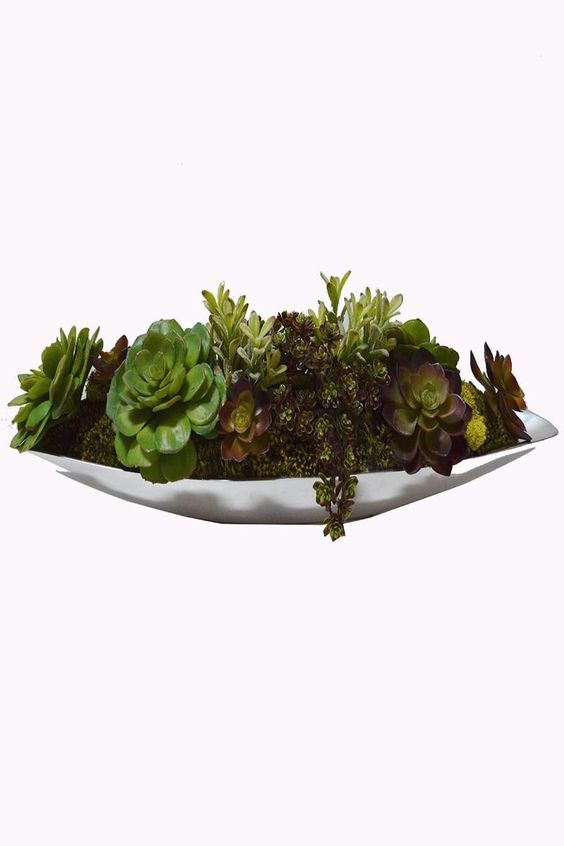 For the Host     Mixed Succulents - main