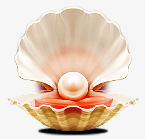 Pearl Shell Pearl Shell Large Pearl Png And Vector With
