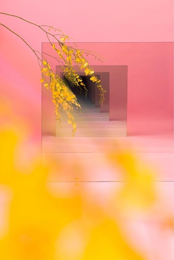 Rose Saumon Photographie Photos Paysage Abstrait