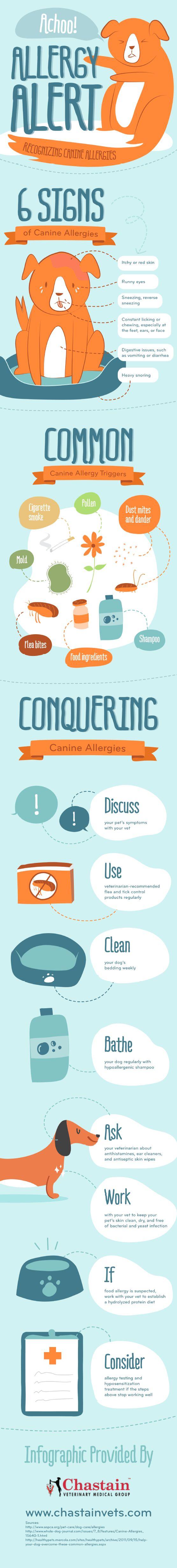 Recognizing canine allergies...
