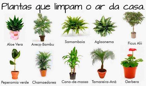 Plantas que limpam o ar da casa