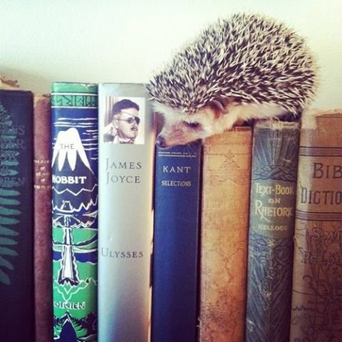 Hedgie loves to read.: