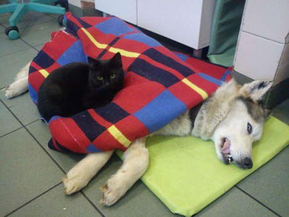 """Ce """"chat infirmier"""" qui prend soin des animaux malades d'un refuge !"""