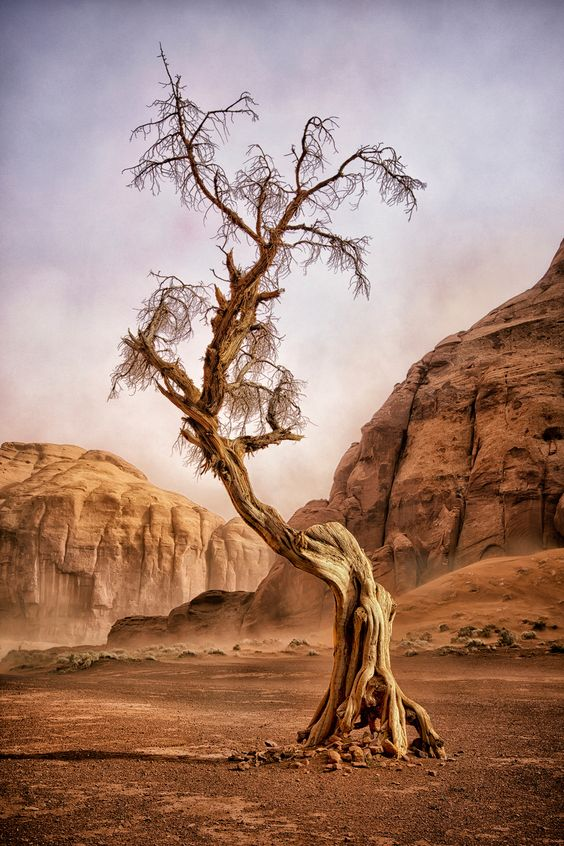 """WINDSWEPT LADY (Nature) - One of the times visiting Monument Valley, Arizona, I was in a box canyon when a severe dust storm came through. This is a photo of an aged, old juniper tree. Its weather-torn skeleton has lasted sun, heat, snow, wind, and nature's elements. It's shape and outline looks as if it's an old windswept and aged lady still standing in a harsh desert climate. (Photo and caption by Dave Drost/National Geographic Photo Contest)"""