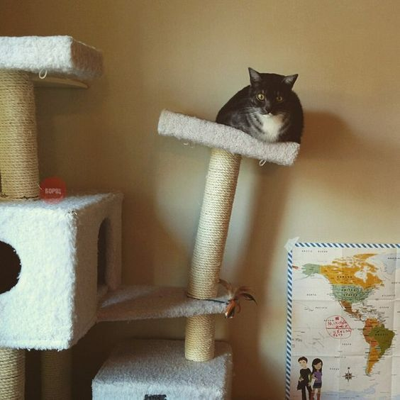 #cat goes down the slippery slope