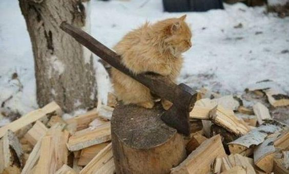 Powerful Master Cat!)))