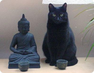 Leyenda Budista, Gatos Goooordos, Gatos Blk, Gatos Zen, Gatos Grises, Gatos Buda, Posando Gato, Señora Maliciosa, Gato Blanco