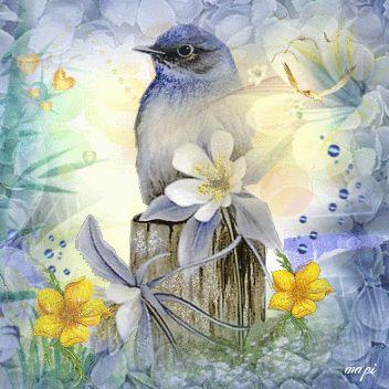 ❤️GIF's ~ Birds