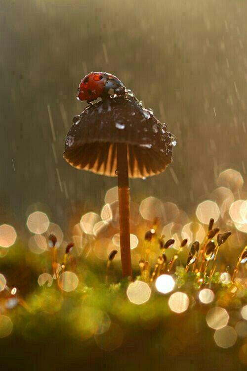 No creo en Dios, pero si existe la lluvia es su bendición mas grande para la tierra.: