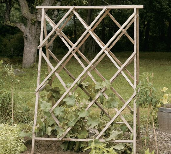 Homemade bean supports
