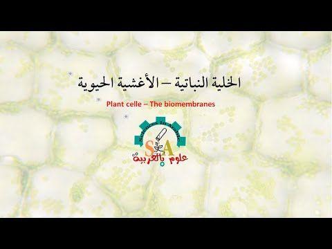الخلية النباتية الأغشية الحيوية Arabic Calligraphy Plants Calligraphy
