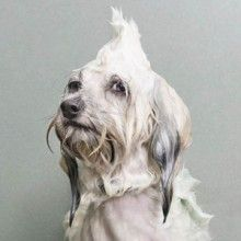 Divertido ensaio fotográfico mostra cachorros molhados!
