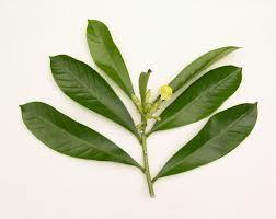 Métodos: Tipos de hojas