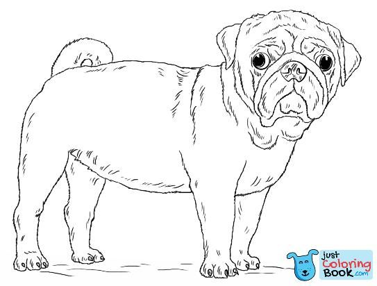 Cute Pug Dog Coloring Page Free Printable Coloring Pages Inside Funny Pug In Dragon Costume Coloring Pages Puppy Coloring Pages Dog Coloring Page Pug Dog