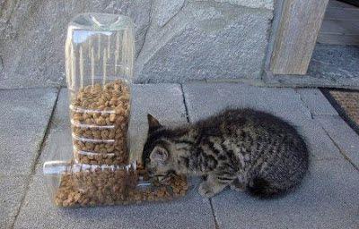 alimentar animais de rua - Pesquisa Google