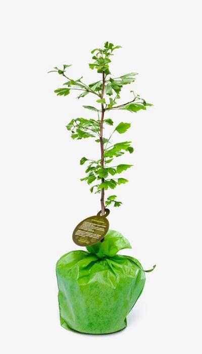 Bij kersverse ouders die een tuin hebben, kun je overwegen om een boompje kado te doen. Die groeit dan mee met de kleine spruit en is een blijvend aandenken.