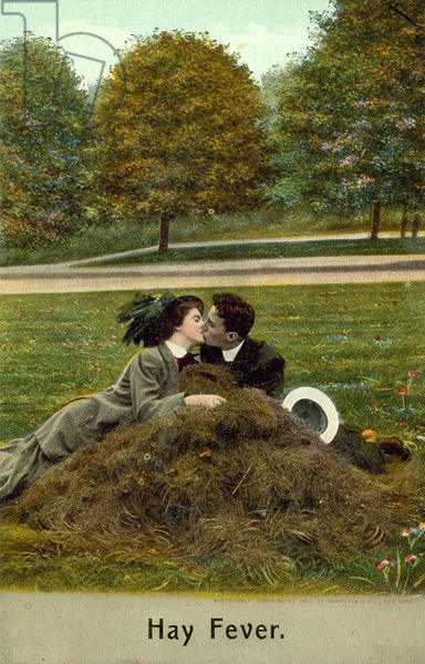 Hay Fever - couple kissing on a pile of hay (ie grass cuttings) (colour photo):