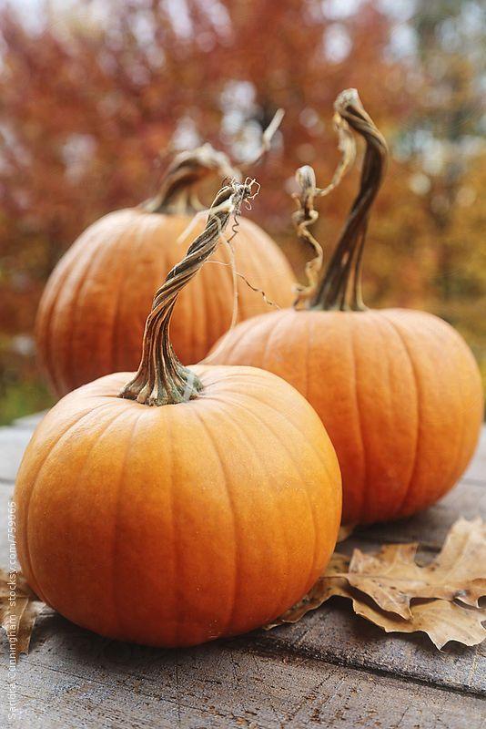 Posts, Pumpkins and Photos on Pinterest