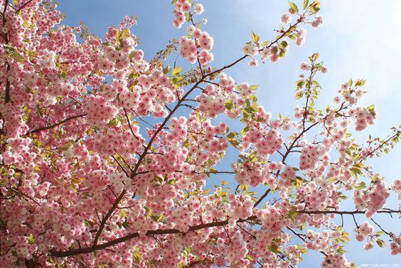 Eine Liebeserklärung an den Frühling!