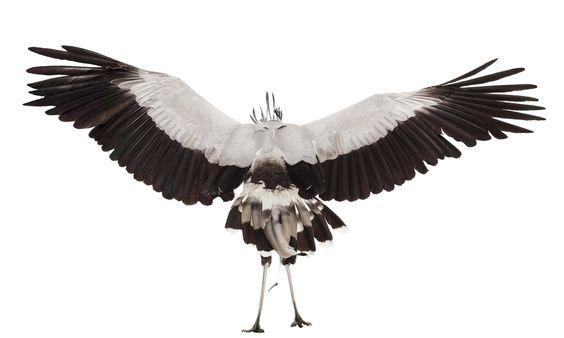 Birds | The Bird Book
