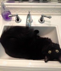 Cat in sink spa.
