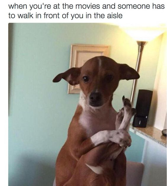 Their life is like ours. | 24 Times Animals Knew Exactly How You Felt About Life
