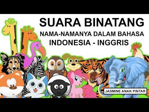 Wild Animal Animal Sounds Funny Animal Videos Animal Attack Jasmine Anak Pintar Youtube Video Hewan Lucu Binatang Binatang Lucu