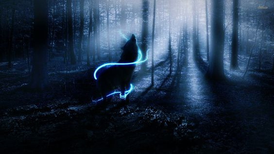 wolf wolves fantasy forest bokeh trees night mood wallpaper background
