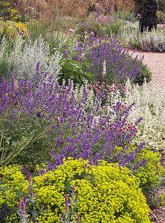Dry Gardens in England (14 of 21)   Beth Chatto Gardens - Dry Garden, Essex, England   Flickr - Photo Sharing!