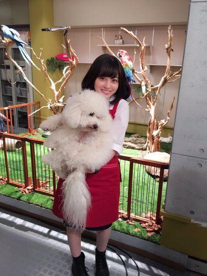 犬と橋本環奈