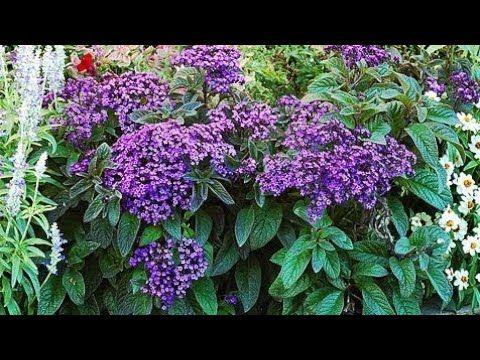 Cvece U Cijem Mirisu Svi Uzivaju Youtube Plants Flowers Make It Yourself