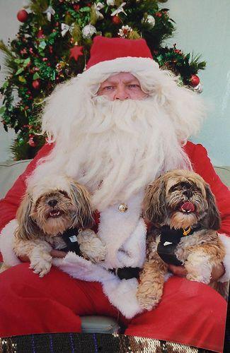 25 Dogs Visit Santa! (Photos) #dogs #puppy #christmas #christmaspuppy #santadog #santapaws