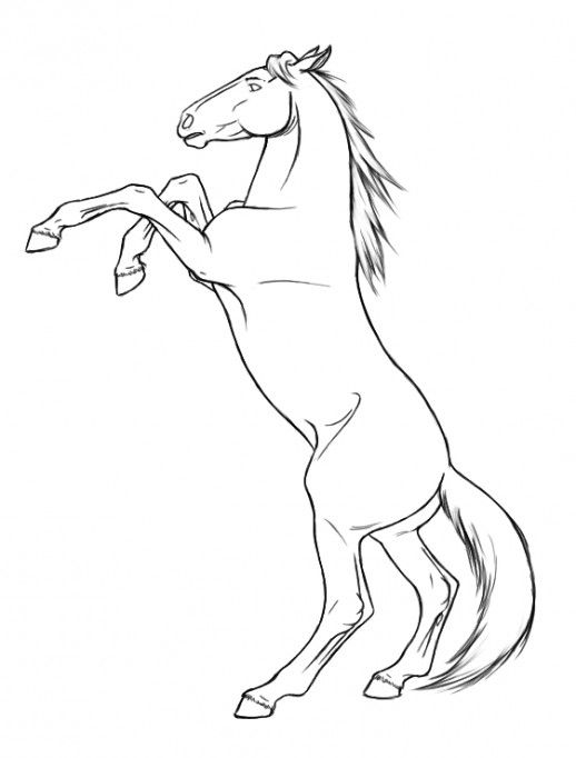 Rearing Horse Coloring Pages Horse Coloring Pages
