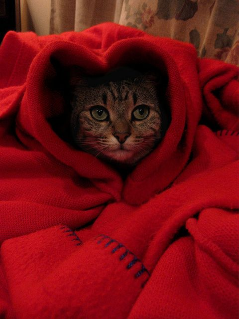 Little Red Riding Cat