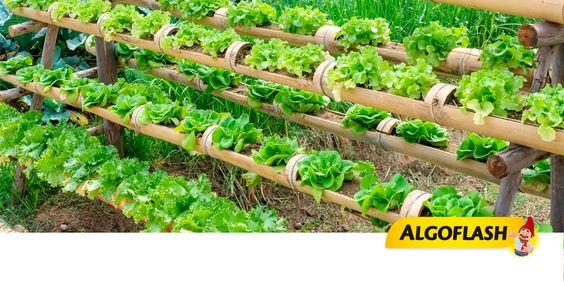 Cultivez votre potager à la verticale ! Gain de place, meilleure gestion de l'eau, limite l'apparition des mauvaises herbes et les invasions de limaces. #potager #légume #conseil #jardinage #algoflash