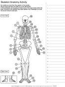 Activities Biology And Skeleton Anatomy On Pinterest