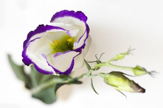 Lisianthus: tres flores en una | Cuidar de tus plantas es facilisimo.com