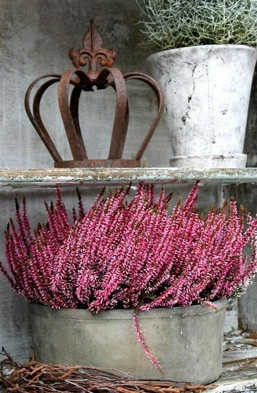 Pin By Klaudia Futera On Autumn In Pink Container Flowers Crown Jewelry Flower Power