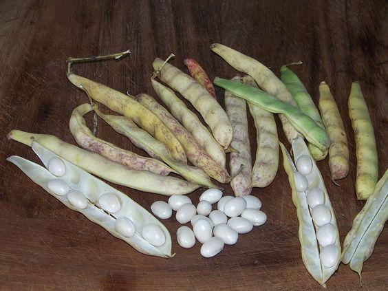 Haricots Coco de paimpol — Wikipédia