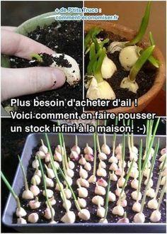 Plus Besoin D Acheter D Ail Voici Comment En Faire Pousser Un Stock Infini A La Maison Jardinage Potager Jardin De Legumes Jardinage