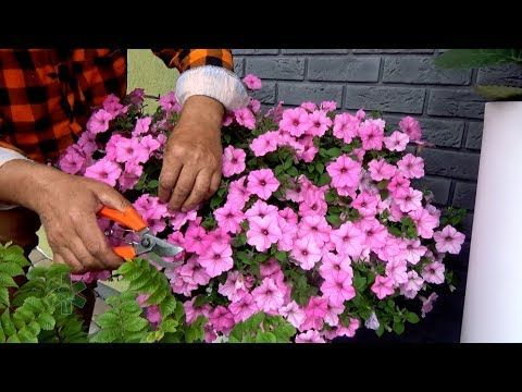 Rosliny Ktore Uprawia Sie Na Balkonie I Tarasie Zeby Bylo Pieknie I Kolorowo Wymagaja Poteznej Dawki Skladnikow Odzywczych I Mineralow Garden Youtube