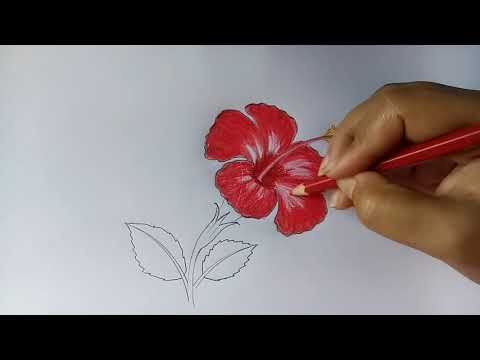 Youtube Hibiscus Flower Drawing Roses Drawing Flower Drawing